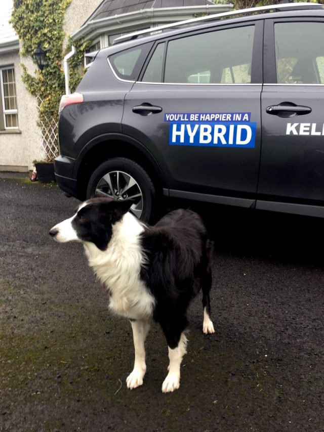 Mollie the family pet coming to terms with A Toyota Hybrid RAV4. Photo Brian McDaid