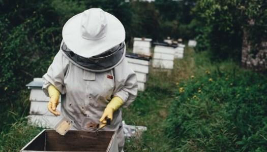 Make a 'beeline' for Doneyloop for their ladies' beekeeping night