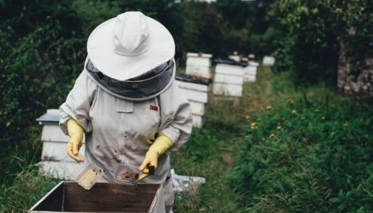 Make a 'beeline' for Doneyloop for their ladies' beekeeping night