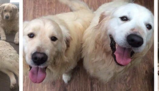 The cutest canine couples are looking for forever homes