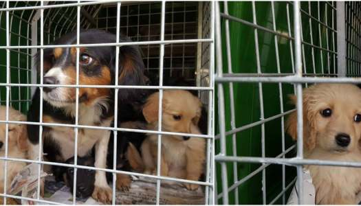 Animals in Need may face closure – but there is hope