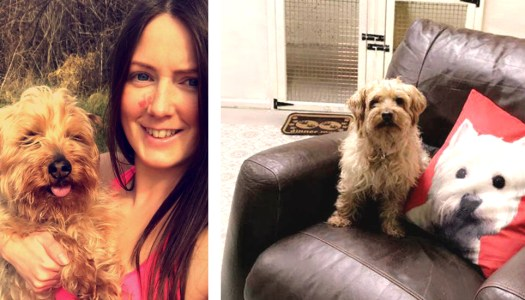 Carndonagh dog lover opens Pawsh Hotel for Dogs