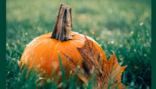 Love gardening? Here's an autumnal gathering for you