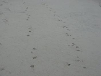 Girls ...Paw Prints At The Beach