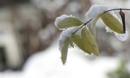 Some of My Favorite Winter Photos