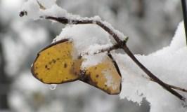Naturalist News – Winter 2013