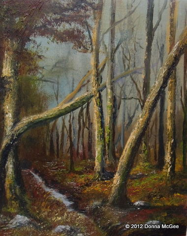 Massy's Wood, Dublin Mountain Trail, woodland winter scene