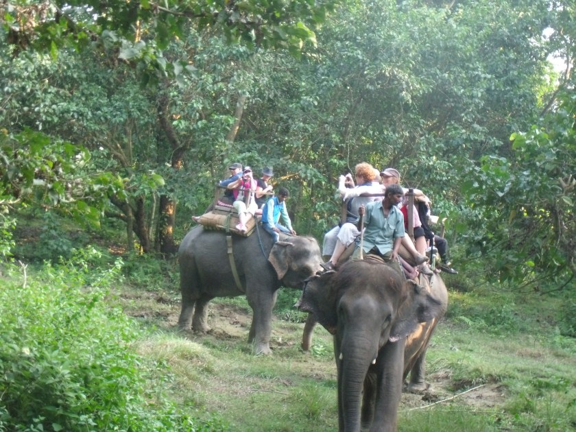 + Travel Adventure to Nepal - Chitwan Day 2 Jungle Trekking