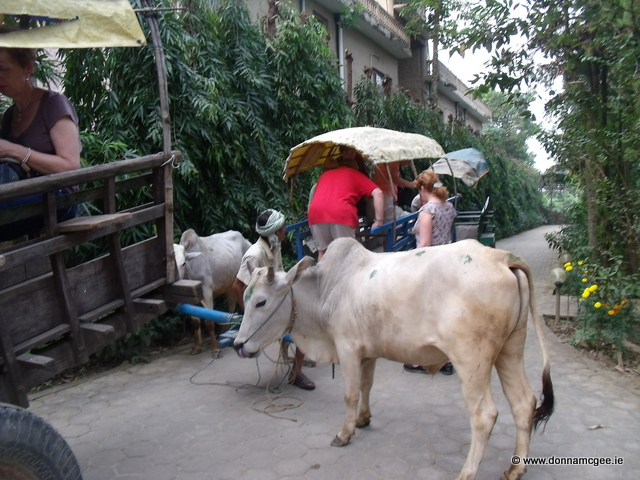 Oxen Carts Art + Travel Adventure Nepal - Chitwan National Park - Day 1