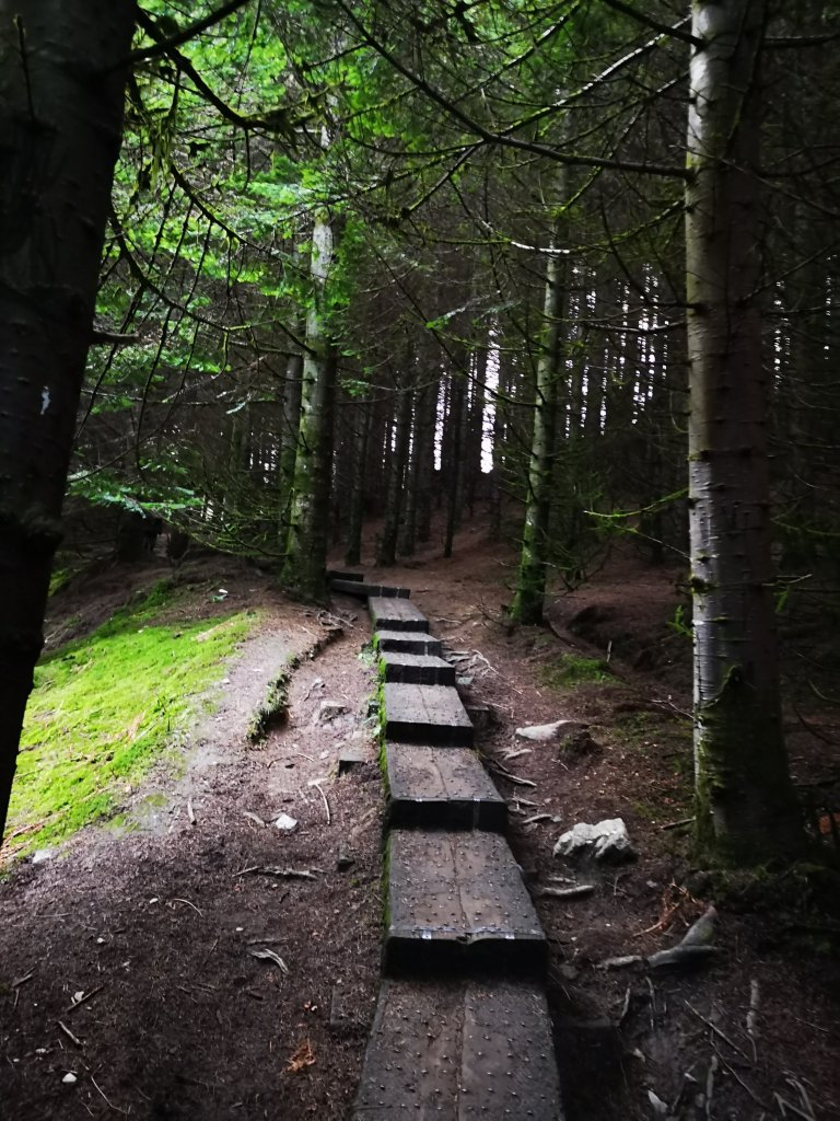 Step into the deep woodlands in Glendalough