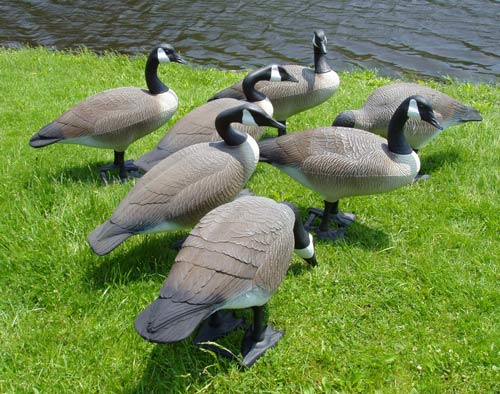 Donna's Lawn Ornaments-Geese Decoys on Backyard Decor Canada id=27937