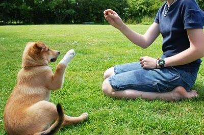 Como-Treinar-Um-Cachorro-Adestramento-em-Casa
