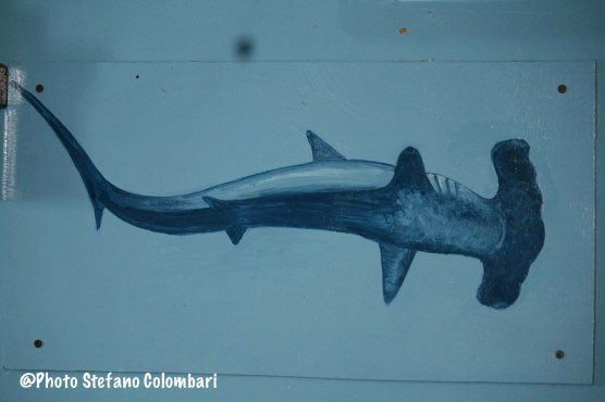 Hammerheads even on boat sides