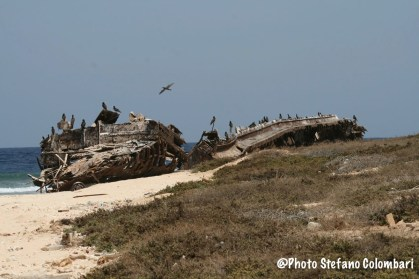 Wrecks and birds