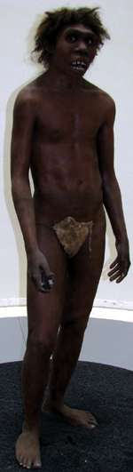 Turkana Boy