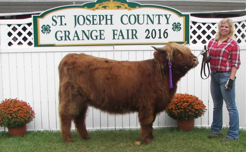 Scottish Highland Cattle Show 2016 St Joseph County Fair
