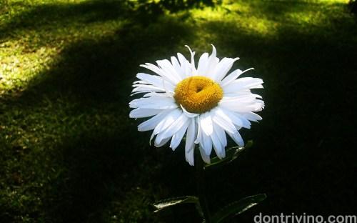 baguio-flower