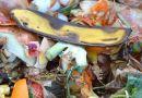 Több mint fél millió embernek elegendő ételt pazarolunk el évente