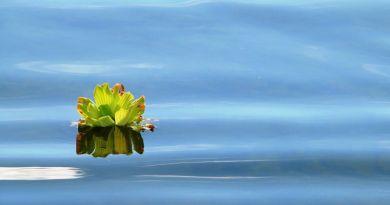 Felmérés készült a magyarországi halastavakban található növényvédőszerekről és gyógyszermaradványokról