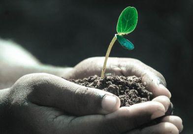 Magbankban mentenék meg a kihaló növényfajokat