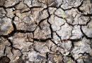 Kihalási válsággal néz szembe a Föld