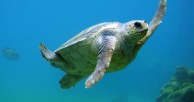 A klímaváltozás hatására eltűnhetnek a hím teknősök?