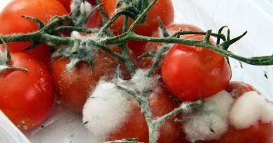Érthetetlen pazarlás: évente 1,8 millió tonna élelmiszert dobunk ki