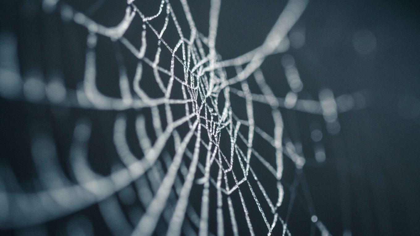 Spider's web with frost on it