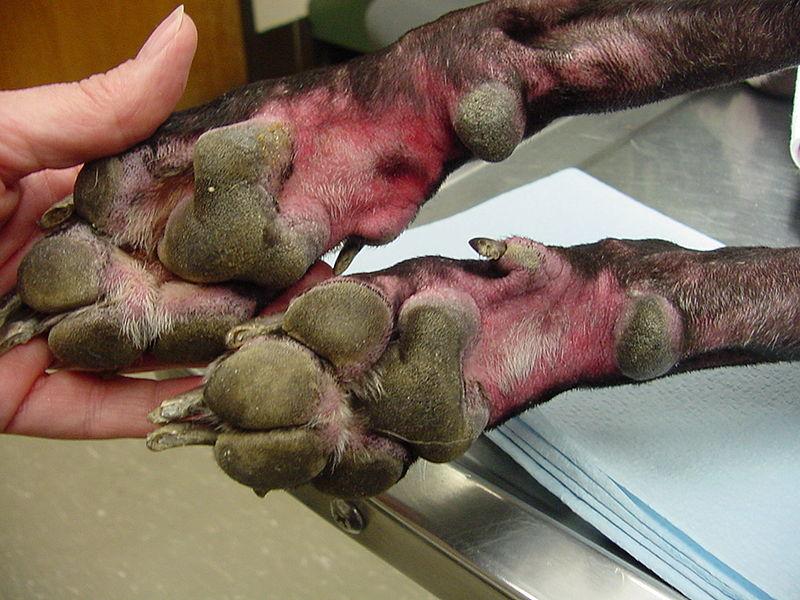 DOOGGS Hautkrankheit Des Hundes Alle Infos Im Dooggs