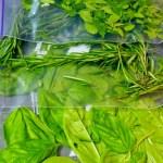 Storing Herbs | doomthigns