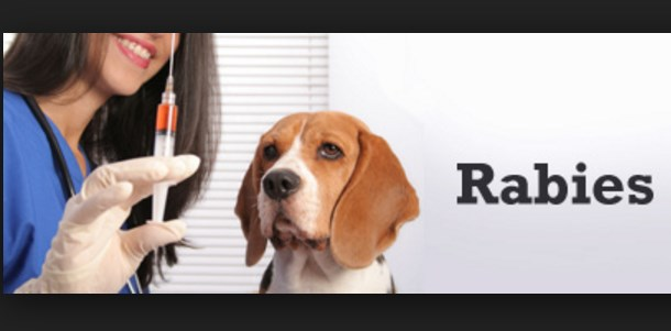 What is Rabies? it's Symptoms, Treatments and Prevention