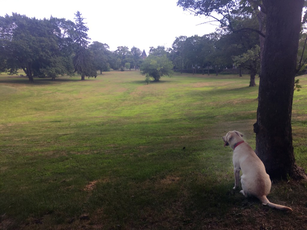 Wanskuk Park, image courtesy of Sarah Zurier