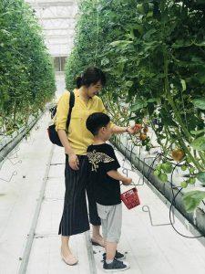 Dora tomato picking