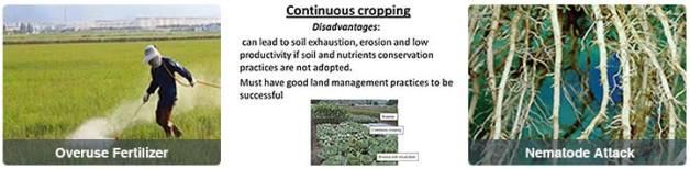 Super prevent soil borne diseases