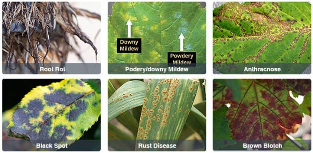 Control Diseases caused by fungus