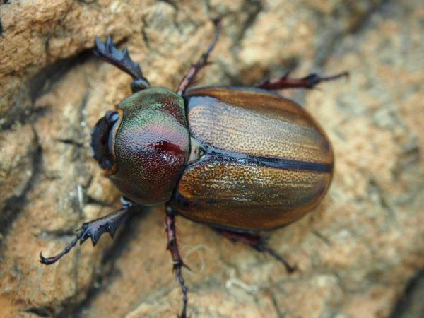 margaridae33.529.5