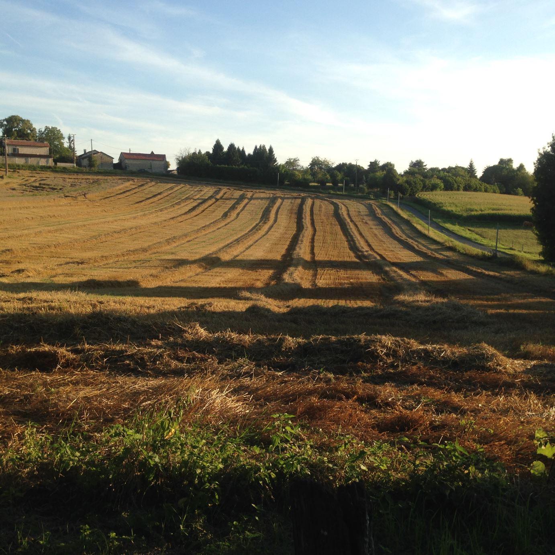 Neighbouring Fields view