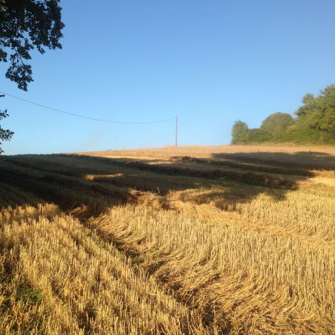 Neighbouring fields with evening shadows