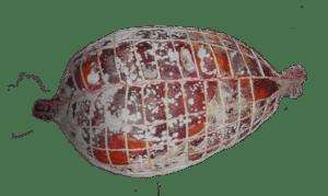 Storia e festival della ventricina a fresagrandinaria