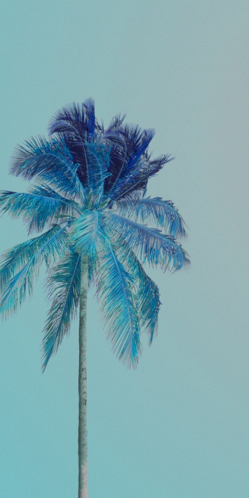 palm tree dorie3
