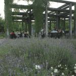 Frühjahrsbepflanzung Dorint Sanssouci Berlin - Potsdam