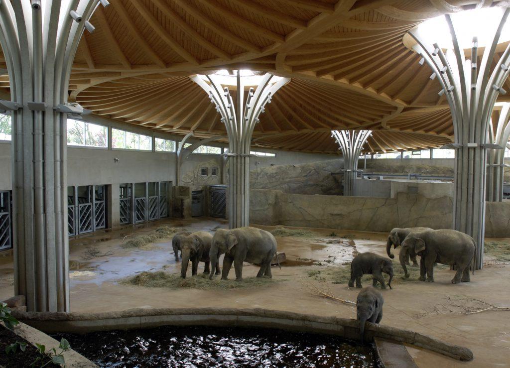 Elefantengehege Kölner Zoo