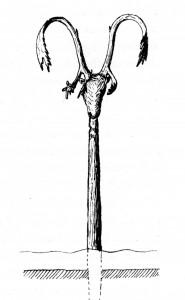Rentierschädel auf Pfahl Giedion