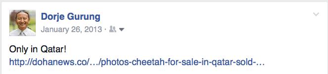 cheetah for sale