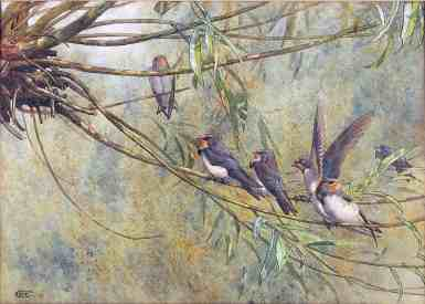 GE Collins, Young Swallows
