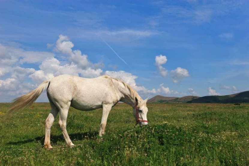 cavalli escursioni agriturismobaldassari