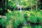004081 Kondalilla National Park Kondalilla Falls
