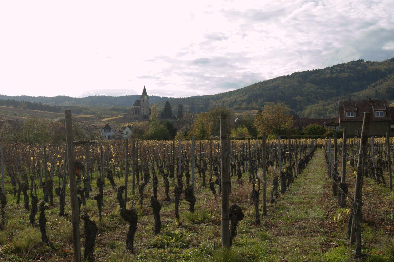 Het dorp Hunawihr in de Elzas met wijngaarden