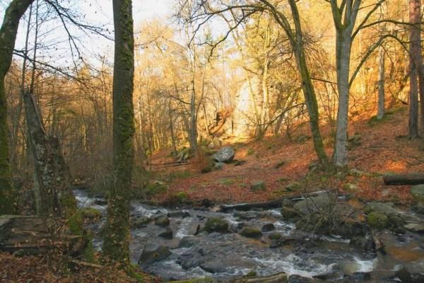 Bergbeekje in de bossen van de Morvan, Bourgondië Frankrijk