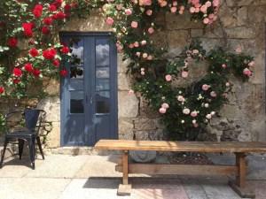 De oude rozenstruiken op het terras